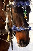 Festive horse — Stock Photo