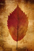 Warm vintage background with leaf — Stock Photo