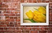 žluté tulipány — Stock fotografie