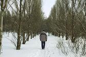 Kış bir yürüyüş — Stok fotoğraf