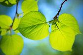 Nature close-up — Stock Photo