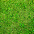 Stock Photo: Green summer grass