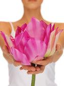 Manos de mujer con flor de loto — Foto de Stock