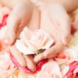 Woman's hands holding rose — Stock Photo