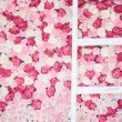 Background full of white and pink roses — Stok fotoğraf