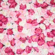 Background full of white and pink peonies - Stock Photo