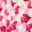 Background full of white and pink peonies — Stok fotoğraf