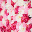 Background full of white and pink peonies — 图库照片