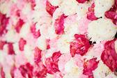 Фон, полный белых и розовых пионов — Стоковое фото