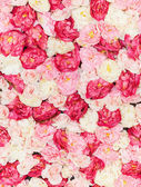 Seamless pattern with flowers — Stock Photo