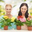 Housewife with flower in pot and gardening set — Stock Photo