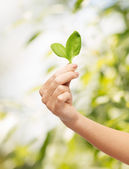 Woman hand with green sprout — Stock Photo