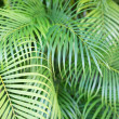Close-up of palm tree leaves — Stock Photo #49610583