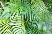 Close-up of palm tree leaves — Stock Photo
