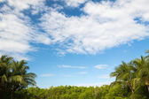 Green forest and cloudy blue sky — Stock Photo