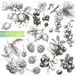 Royalty-Free Stock Vector Image: Berries.