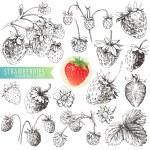 Strawberries. — Stock Vector #12374973