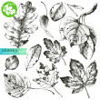 Royalty-Free Stock Vector Image: Leaves