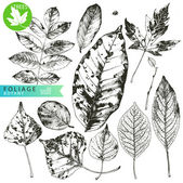 Foliage — Vetorial Stock