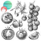 Pomodori — Vettoriale Stock