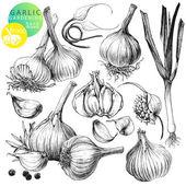 大蒜 — 图库矢量图片