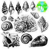 Seashells — Stock Vector