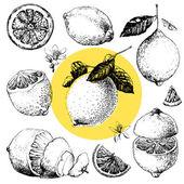 Lemon — Stock Vector