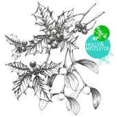 Holly and Mistletoe — Stock Vector