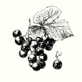 Vid de uva — Vector de stock