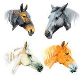 Watercolor horses — Stok fotoğraf