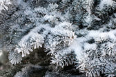 Fur-tree branch with white fluffy snow — Stock Photo