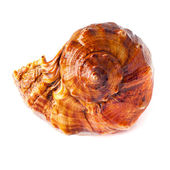 Big spiked seashell on white. — Stock Photo