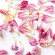 Royalty-Free Stock Photo: Dried petals tulips lay on a white