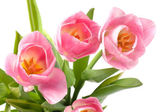 Bouquet of tulips. — Stock Photo