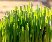 Fresh green spring and summer grass with sun. — Stock Photo
