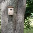 Birdhouse hanging on the big tree — Stock Photo