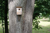 Birdhouse hanging on the big tree — Stock Photo