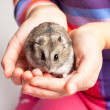 Djungarihamster in girl hand — Stock Photo #32520677