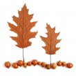 Two trees and the land of acorns and dry oak leaves — Stock Photo #33268521
