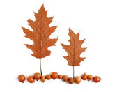Two trees and the land of acorns and dry oak leaves — Stock Photo