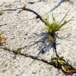 Grass growing through concrete — Stock Photo #34704129