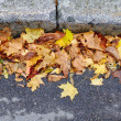 Yellow autumn leaves on road — Stock Photo