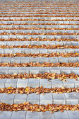 Autumn leaves on the concrete stairs — Stock Photo