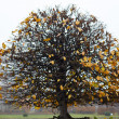 Last yellow leaves at the tree — Stock Photo