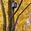 Old blue birdhouse on the tree — Stock Photo