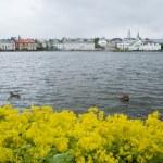Reykjavik — Foto de Stock
