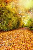 Fall foliage — Стоковое фото