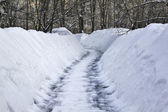 Trail in the snow — Stock Photo