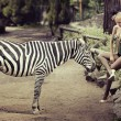 Beautiful lady sitting next to a zebra — Stock Photo