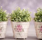Photo-illustartion of domestic plants — Stock Photo